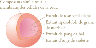 schéma carrying capsule